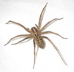 Hobo Spider Exterminator - Portland OR - Vancouver WA
